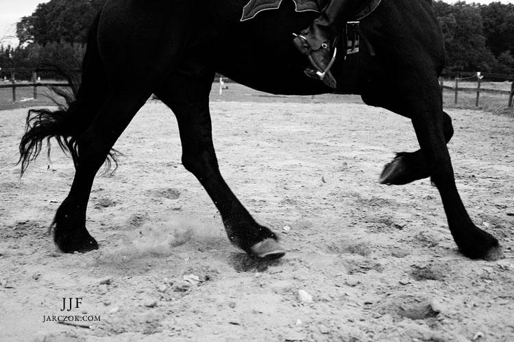 Koń czarny fryzyjczyk  w biegu.